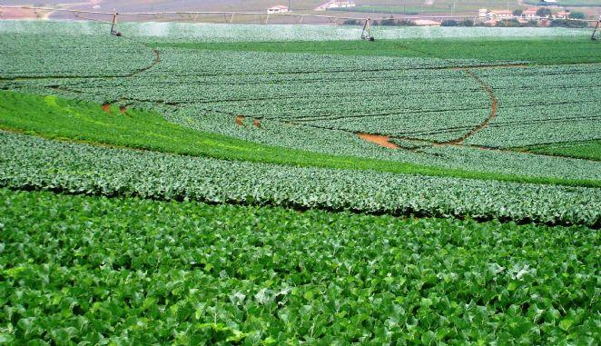 Fazenda Ouro Verde - BuonoGel - Turismo Rural
