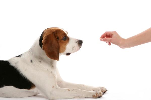 Em meio isolamento a social animais trazem alívio para as pessoas