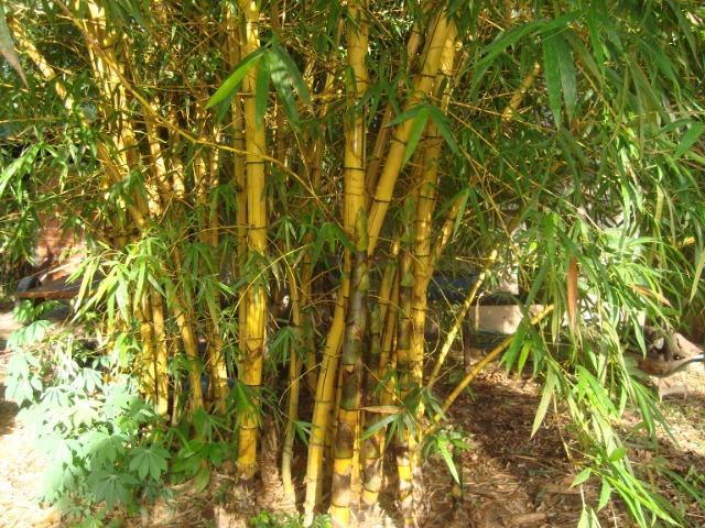 A Fábula da Samambaia e o Bambu