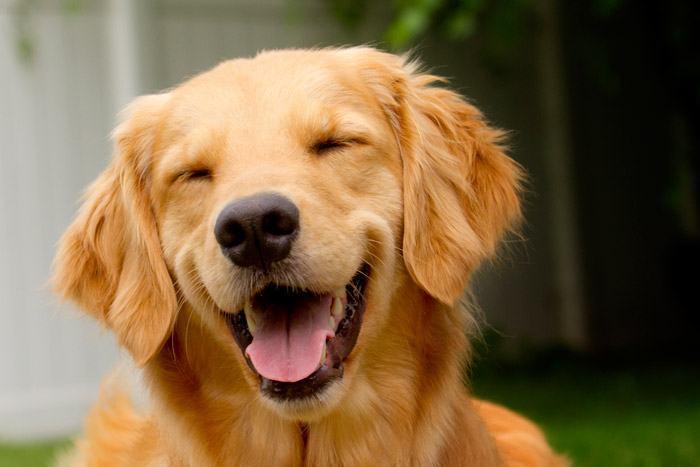 O cachorro ideal para você!