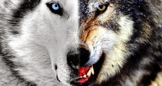 A Parábula Dos Dois Lobos