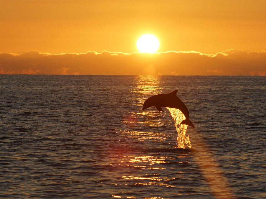 Conheça a Baía dos Golfinhos em Ilha Comprida