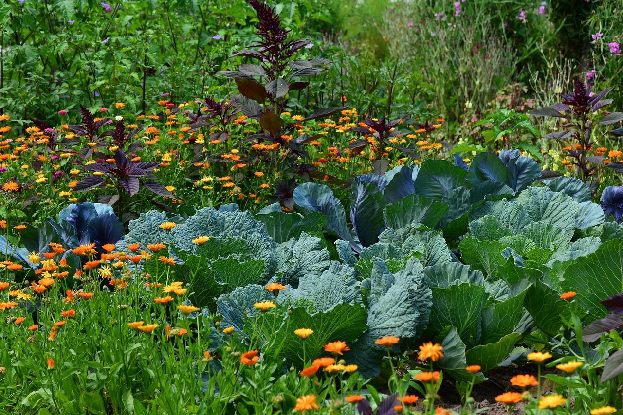 Projeto Horta – alimentação saudável em creches de Itupeva