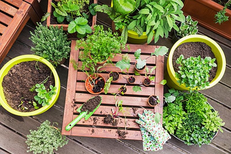 Como Começar Uma Horta Em Casa E Usar Compostagem