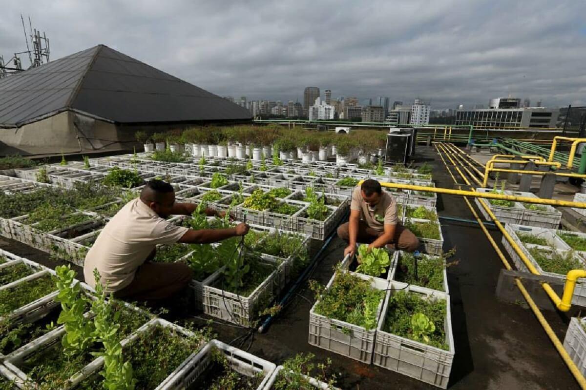 Shopping cria horta utilizando resíduos da praça de alimentação