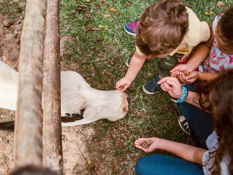 Roteiro KIDS: Natureza e diversão em Cotia SP