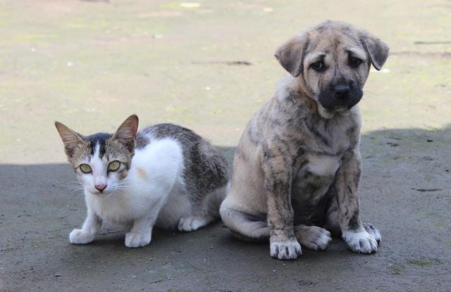 Prefeitura de Itupeva promove Campanha do Agasalho Animal