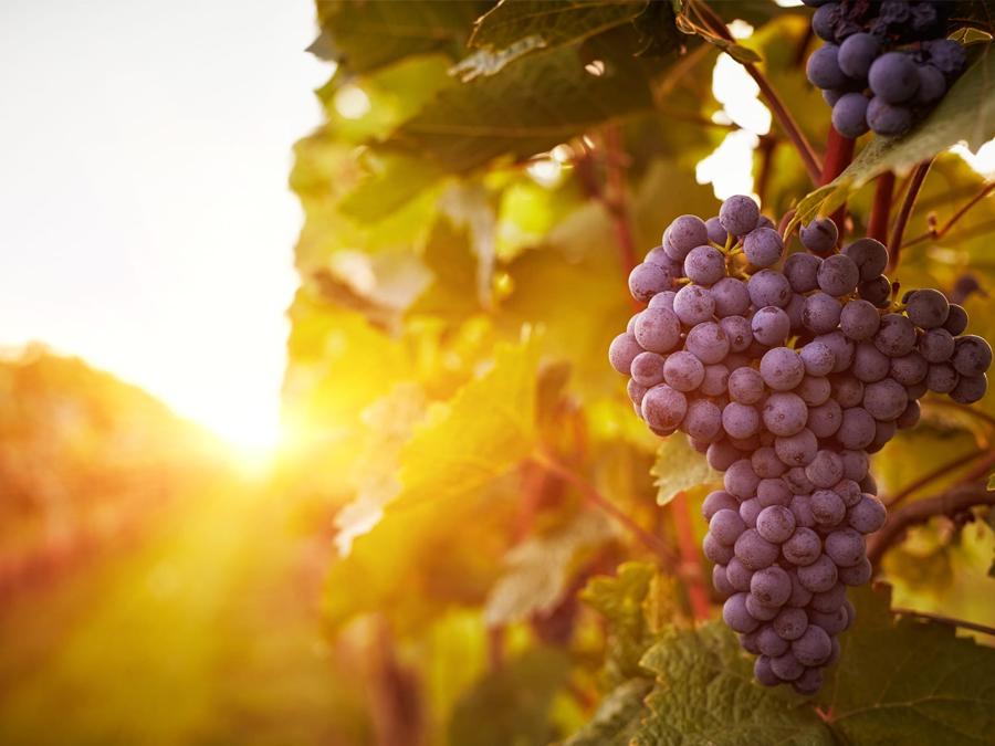 Conheça o Bairro Traviú em Jundiaí: vinícolas, boa gastronomia e paisagens deslumbrantes